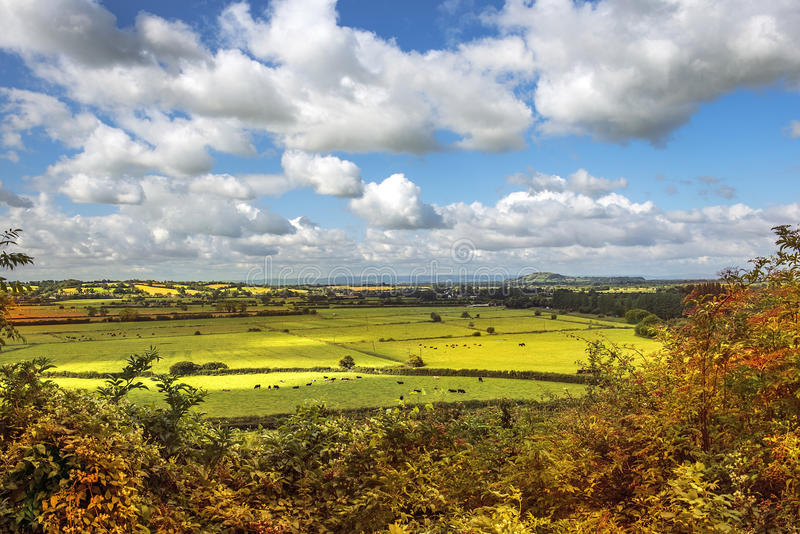Ländliche szenische Ansicht von grünen Feldern, Salisbury, England stockfotos