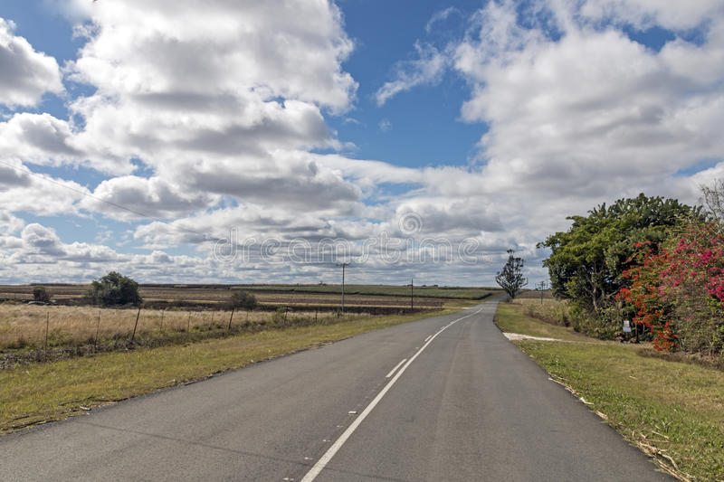 Ländlicher leerer Asphalt Road Running Through Sugar Cane Fields stockfoto
