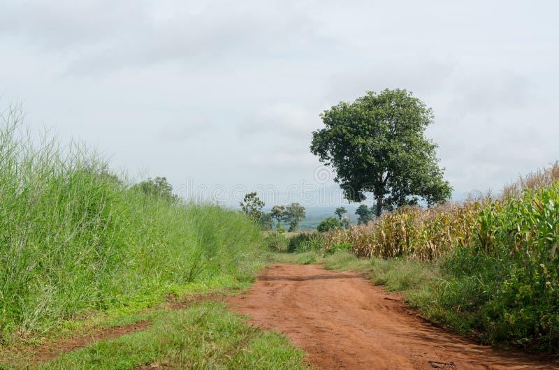 Ländlicher Schotterweg und grüne Wiese auf langem Weg lizenzfreies stockfoto