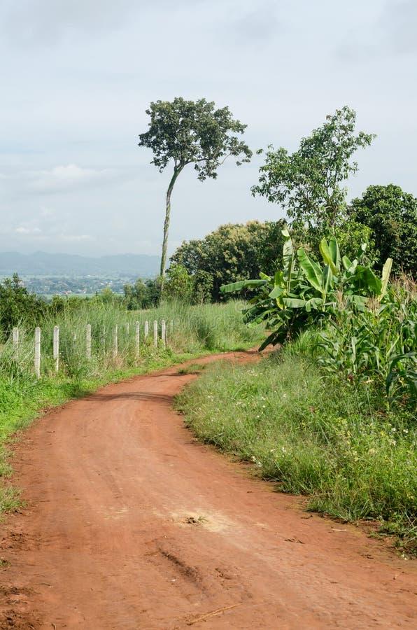 Ländlicher Schotterweg und grüne Wiese in den ländlichen Dörfern lizenzfreies stockfoto