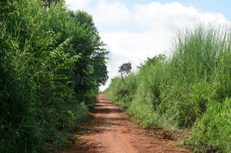 Ländlicher Schotterweg und grüne Wiese in den ländlichen Dörfern stockfotografie