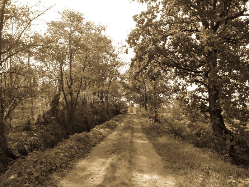 Ländlicher Weg der Landschaft Wald lizenzfreies stockbild