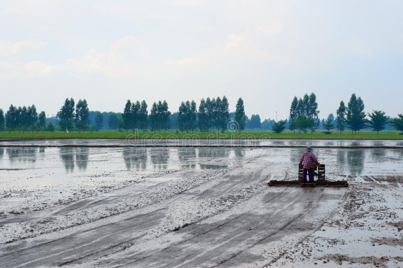 Ländliches Leben muss Reis jedes Jahr tun stockbild