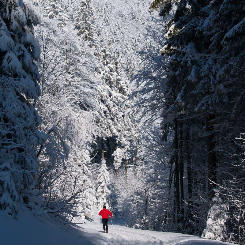 Längdlöpning för ung man på en älskvärd vinterdag royaltyfri foto