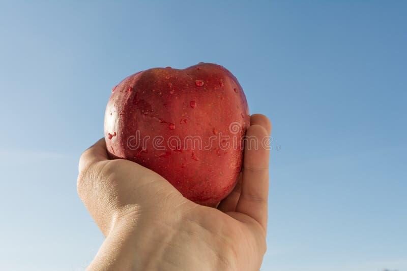 Längliche Hand eines Mannes, der einen roten Apfel gegen einen Himmel hält lizenzfreie stockfotos