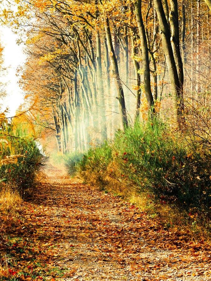 längs den dimmiga vägen för höstfältskog fotografering för bildbyråer