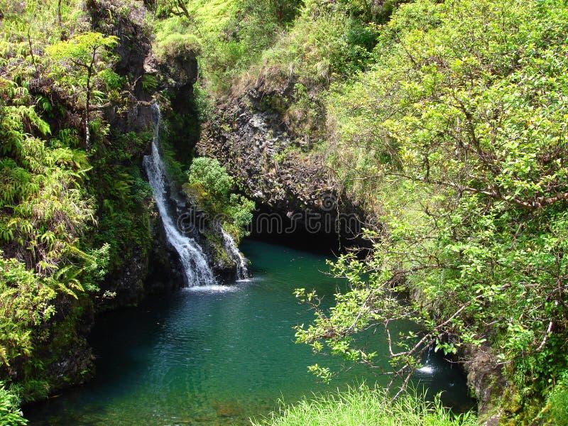längs den hana hawaii maui vägen till vattenfall royaltyfria bilder