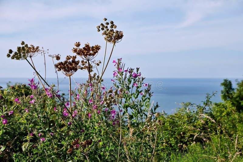 Längs den kust- banan fotografering för bildbyråer