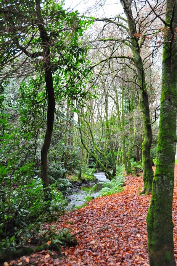 längs skogflodstrandtrees royaltyfria bilder