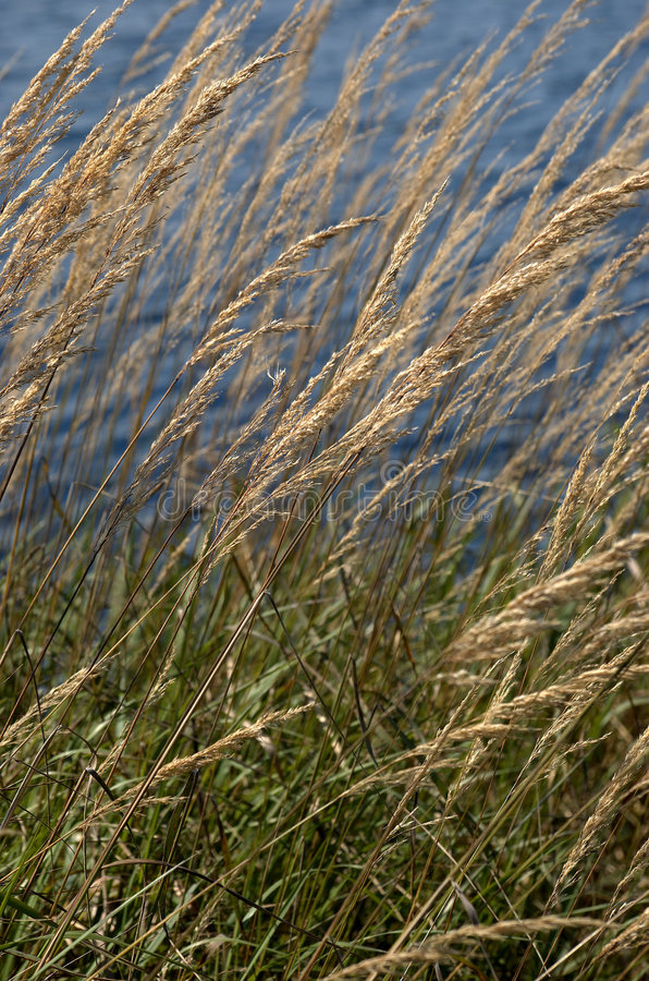längs strandgräshavet arkivbild