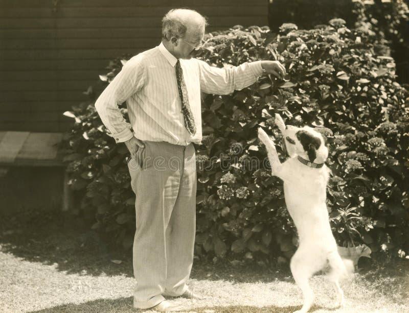 Lära ett nytt hundtrick royaltyfria foton