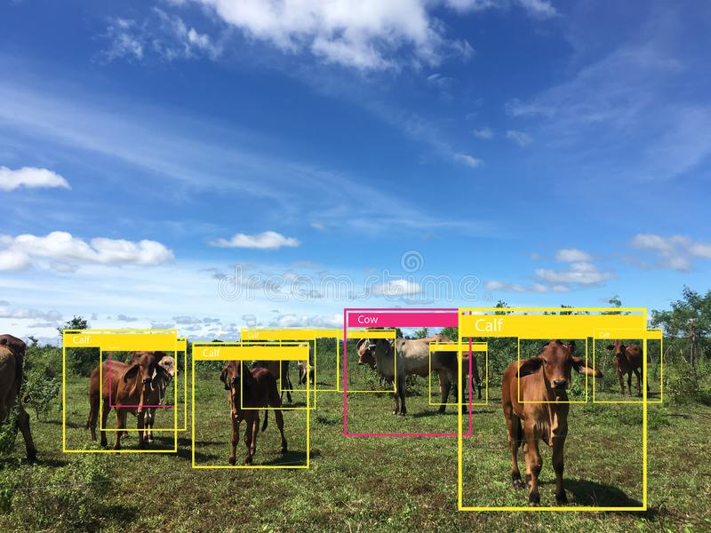 Lära för Iot maskin med människa- och objekterkännande som använder konstgjord intelligens till analytisk och identisk c för mätn royaltyfria foton