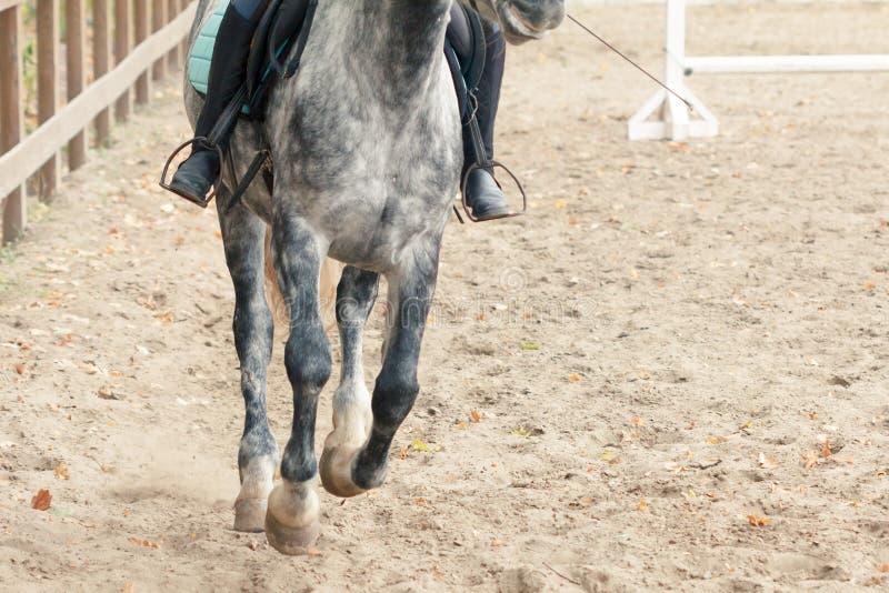 Lära hästryggridning Instruktören undervisar den tonåriga ryttaren arkivbild