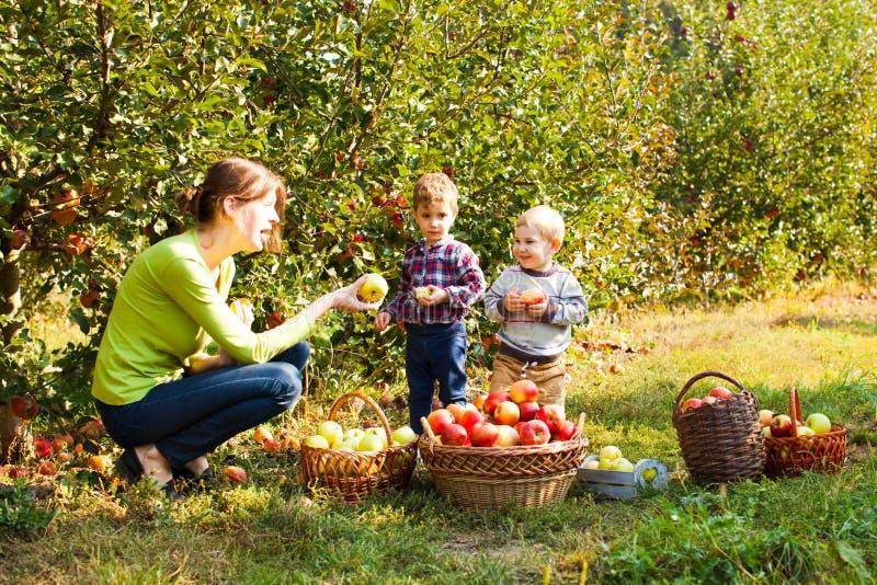 Lärare med förskolebarn i äppleträdgården arkivfoton