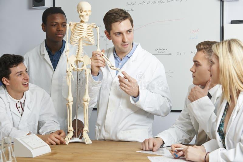 LärareWith Model Of mänskligt skelett i biologigrupp royaltyfri fotografi