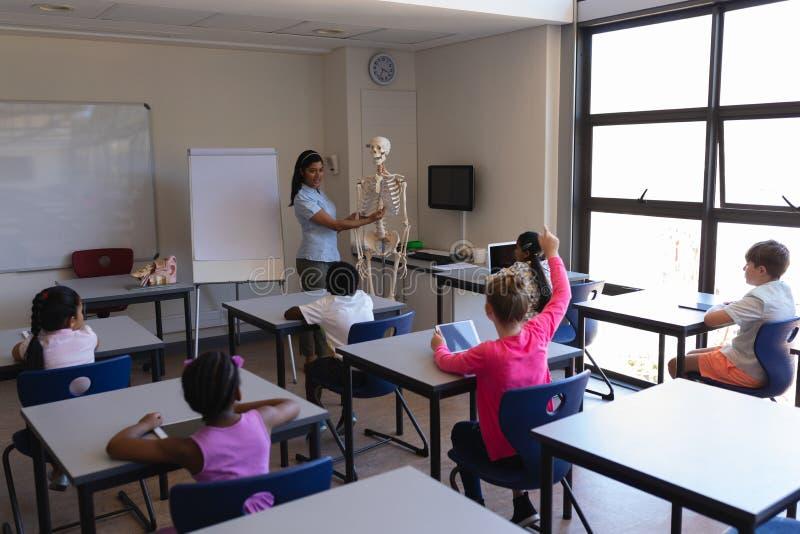 Lärarinna som förklarar skelett- delar till skolbarn i klassrum arkivbilder