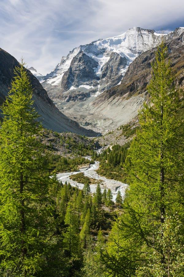 Lärkträd som växer ovanför den alpina dalen royaltyfri foto