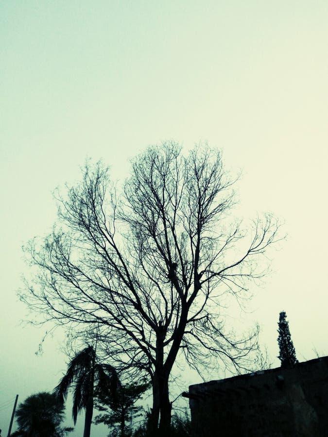 Läskig afton och tysta träd royaltyfri foto