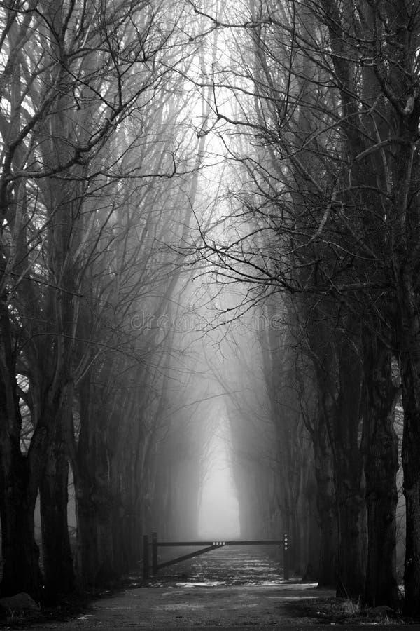 Läskig dimmig skog i svartvitt för halloween arkivbilder