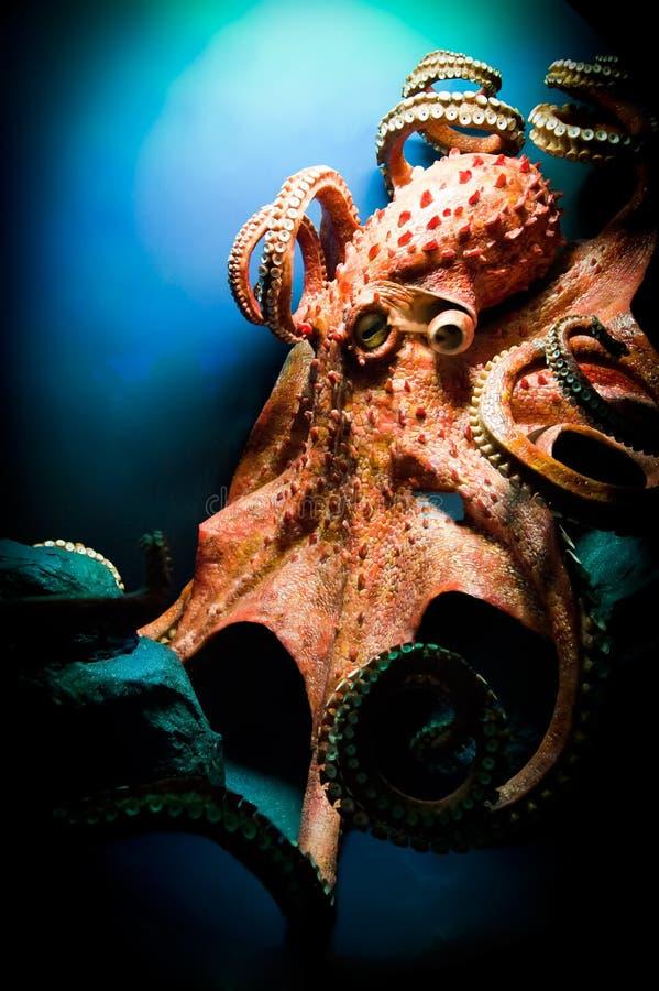 läskig jätte- bläckfisk royaltyfri bild