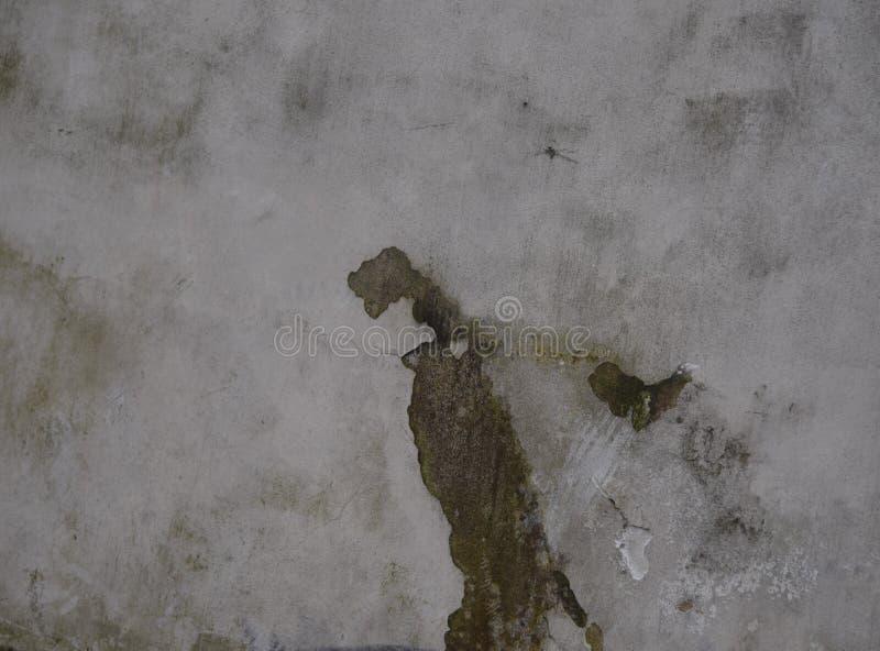 Läskig seende spricka på väggen royaltyfri foto