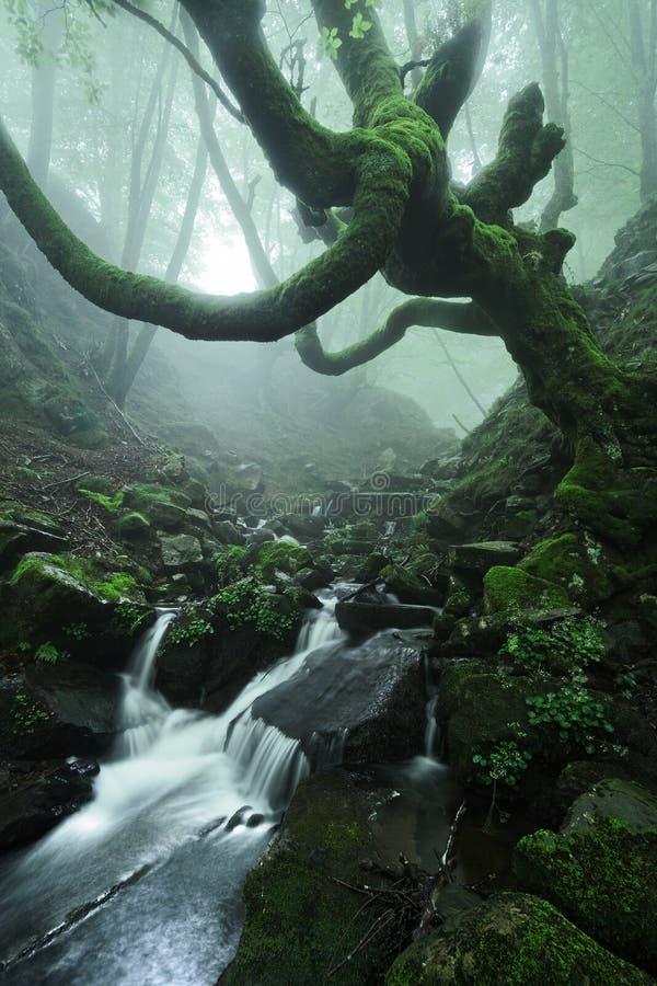 Läskig skog med det kusliga trädet och en ström royaltyfria foton