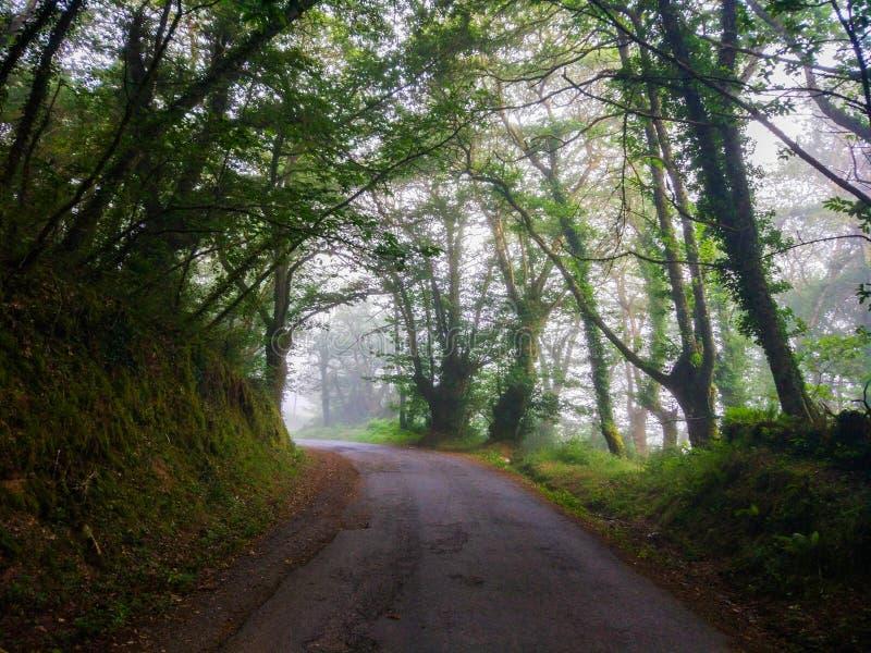 Läskig skogsmark mycket av träd och den lantliga vägen i en dimmig dag Camin arkivfoton