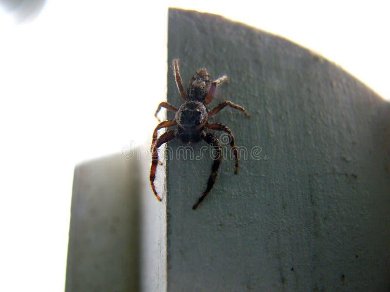 läskig spindel 2 fotografering för bildbyråer