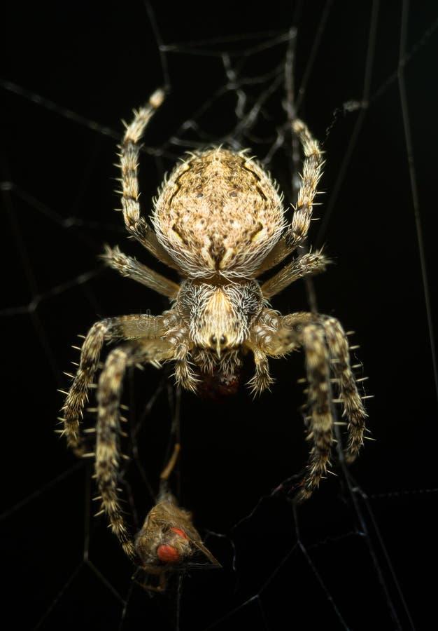 Läskig spindel i natten royaltyfria bilder