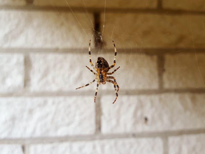 Läskig spindel som håller ögonen på huset arkivfoton