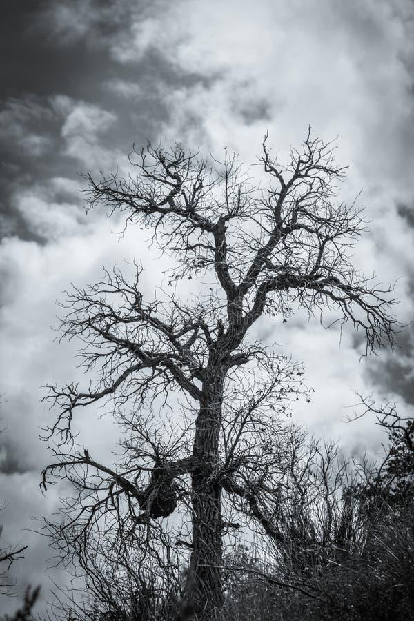 läskig tree royaltyfri foto