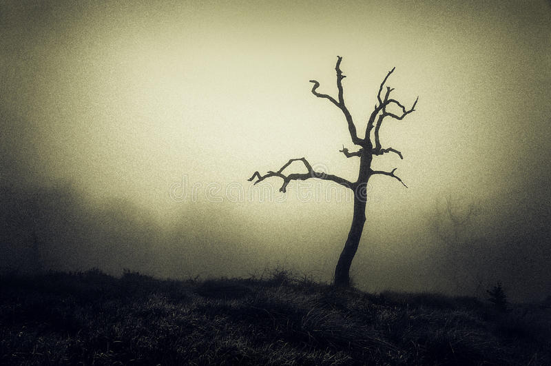 Läskigt ensamt kalt träd fotografering för bildbyråer