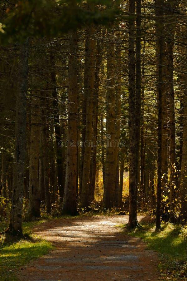 Lässt gehender Hinterfall Sussex Bäume stockbild