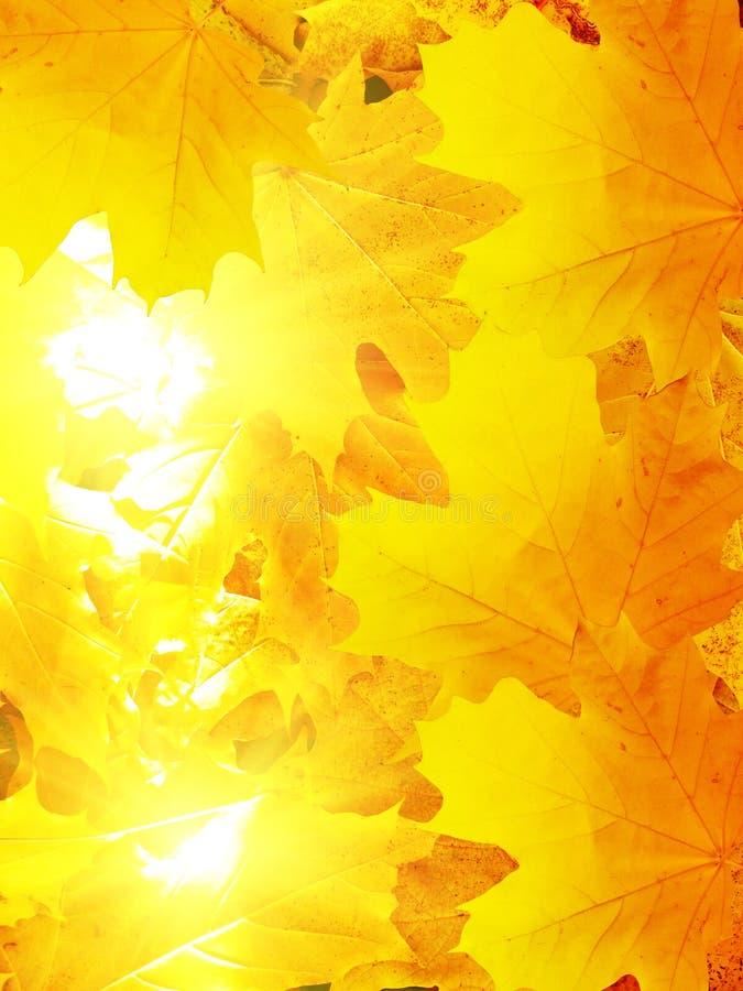 Lässt Herbst im Holz stockfotografie