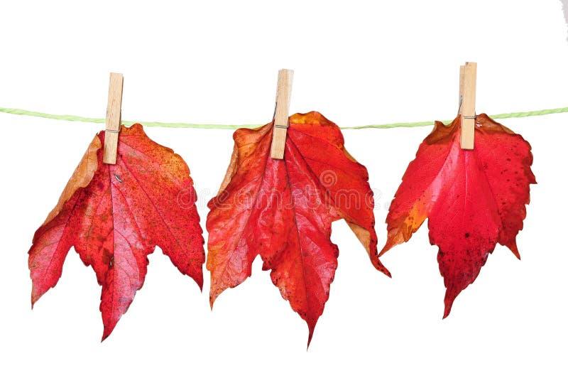 Lässt Herbsthintergrund lizenzfreie stockfotografie