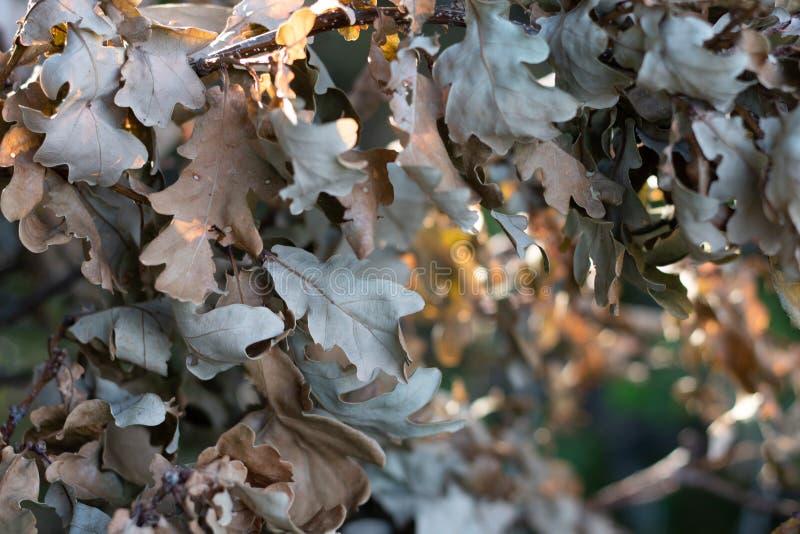 Lässt trockenen Herbst lizenzfreie stockfotos