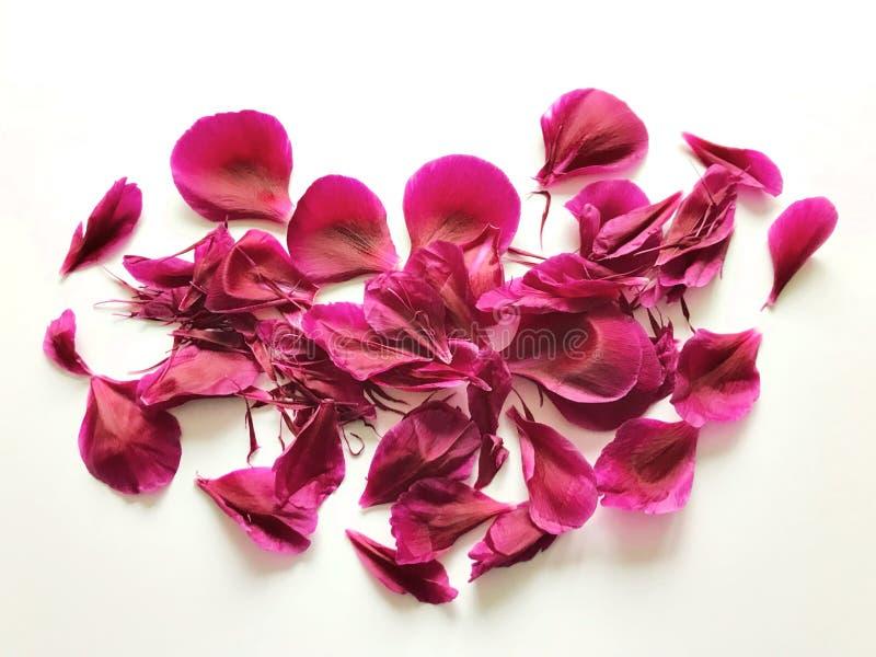 lätt redigera blommahjärta till royaltyfri fotografi