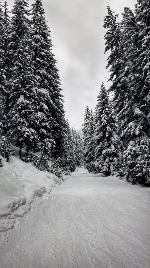 Lätt skidar lutningen i skogen royaltyfria foton