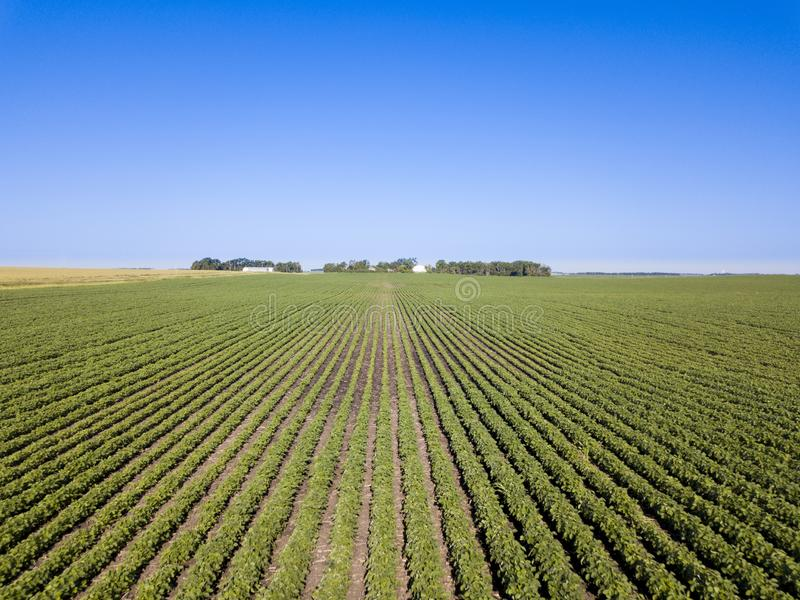 Låg flyg- sikt av det sunda sojabönafältet i South Dakota fotografering för bildbyråer