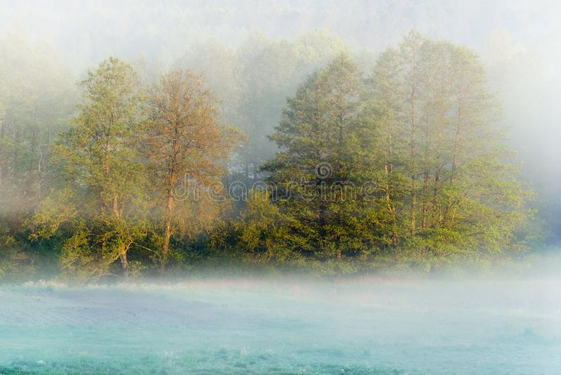 L?g h?ngande mist runt om tr?d ?ver gr?s p? tidig dimmig morgon i f?lten Mystisk atmosf?r i naturlandskap arkivfoton