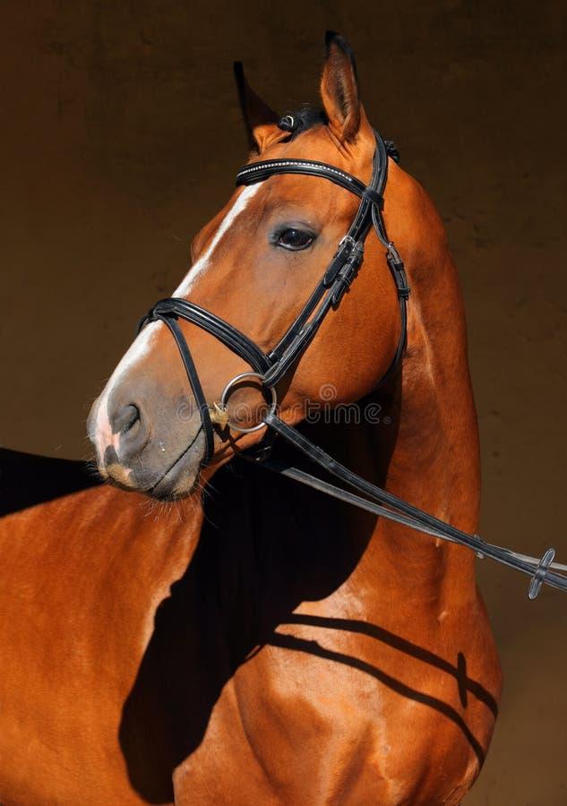 Låg nyckel- headshothäst i mörkt stall royaltyfria foton