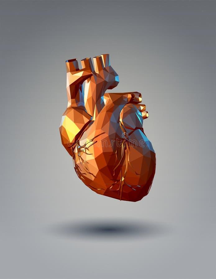 Låg poly mänsklig hjärta 3D på grå bakgrund vektor illustrationer