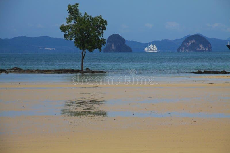Lågvatten på den Thailands kustlinjen med vaggar bildande, trädet och seglingskeppet i bakgrunden, Ao Nang, Krabi royaltyfria foton