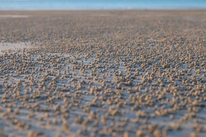 Lågvatten på stranden arkivbild