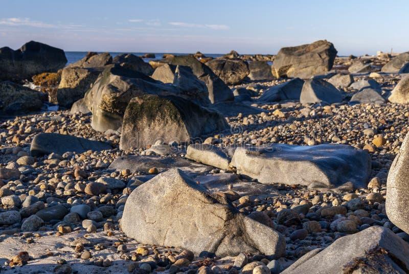 Lågvattenvråk skäller stranden royaltyfri bild