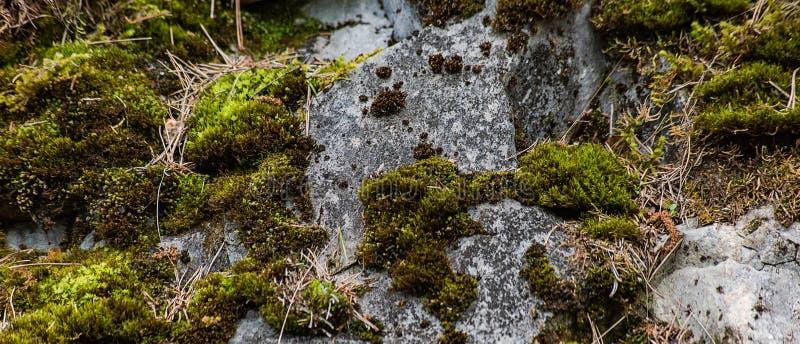 Lång bakgrund med för marmorsten för mossa dold yttersida royaltyfria foton