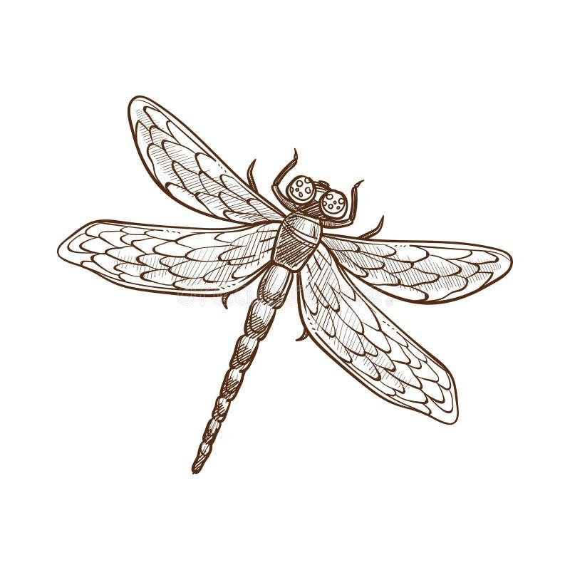 Lång-förkroppsligat rov- kryp för slända snabb-flyg med två par av vingar stock illustrationer