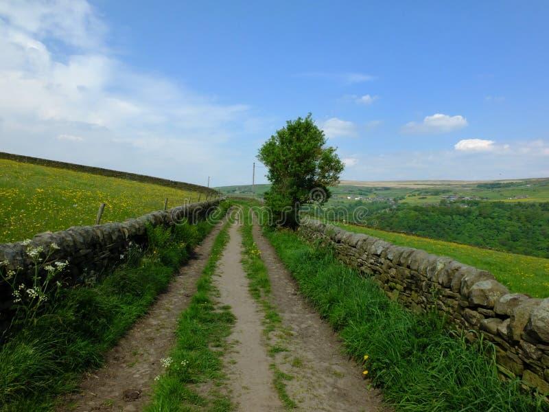 Lång rak landsgränd som går stigande in i vårbygd med väggar för torr sten som gränsar betesmark och ett enkelt träd royaltyfria foton