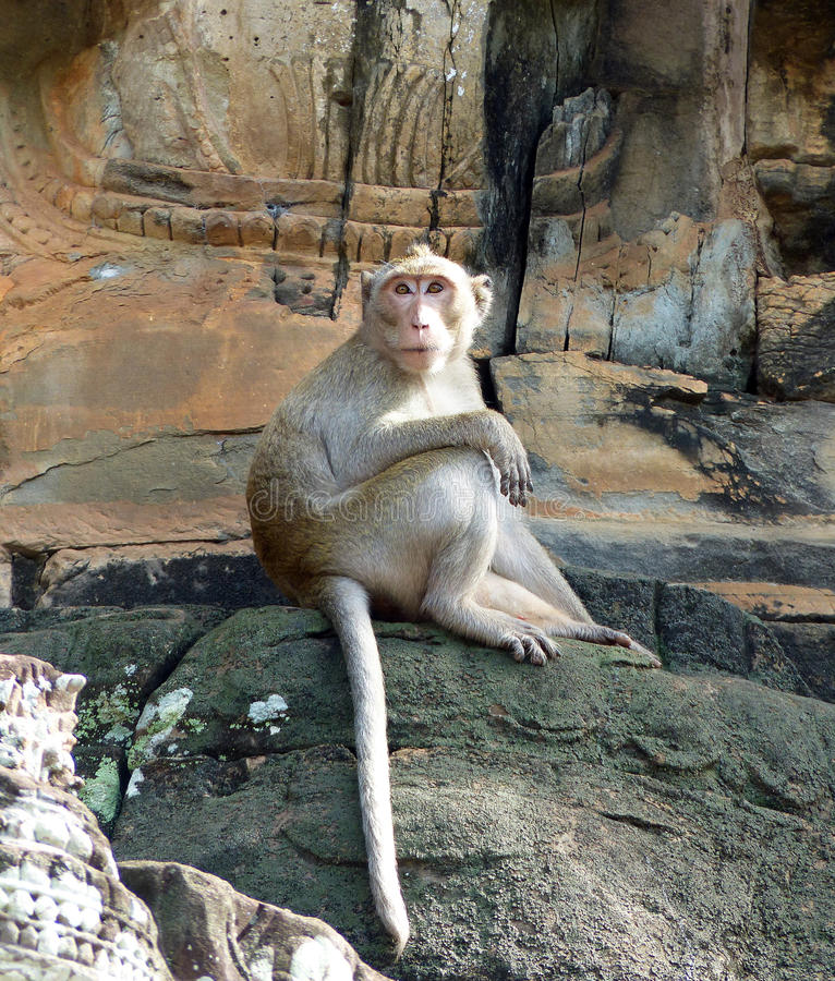 Lång-tailed macaque på Angkor Thom royaltyfri foto
