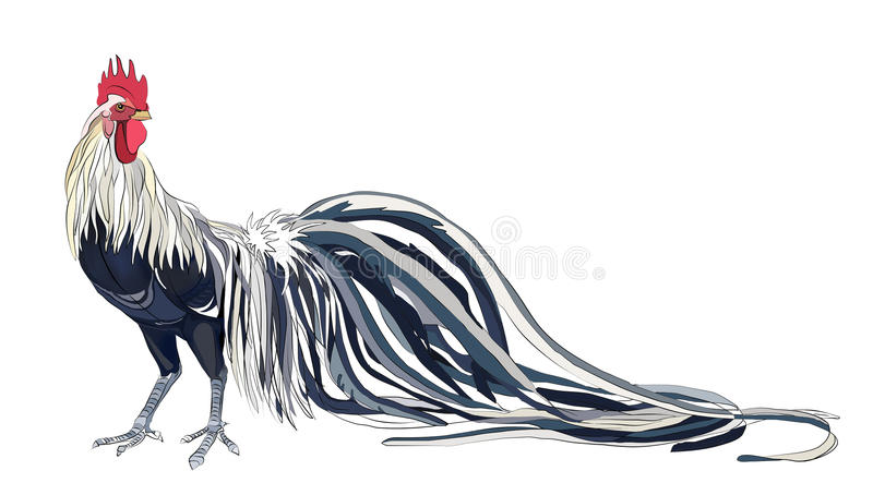 Lång-tailed tupp stock illustrationer